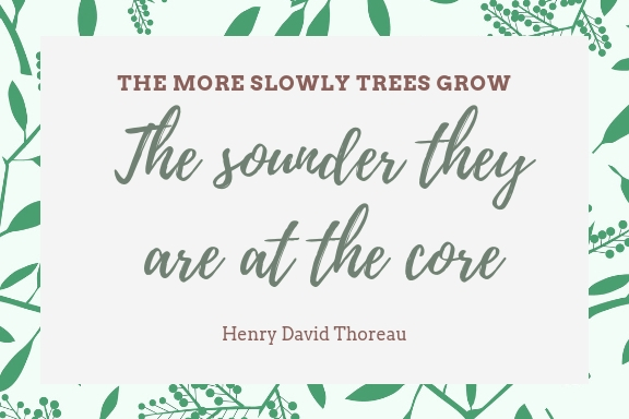 the more slowly trees grow the stronger they are at their core